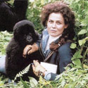 gorillas-mist-125.jpg