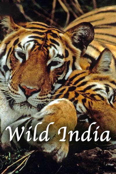 wild-india-2×3