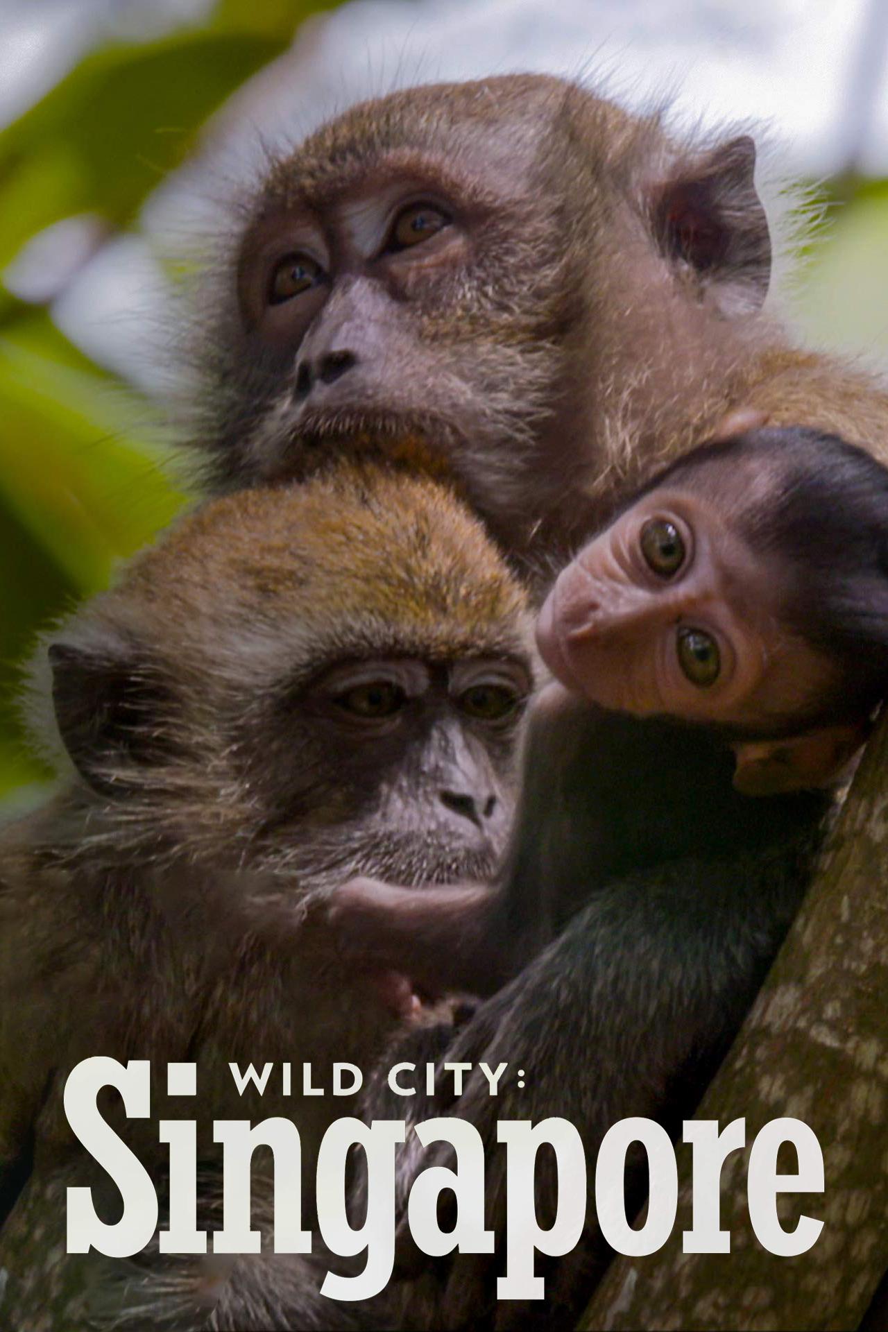 wild-singapore-2
