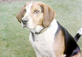 Fraser S Phrases The Dog S Bollocks Anglophenia Bbc