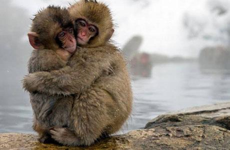 Snow Monkeys, FINAL