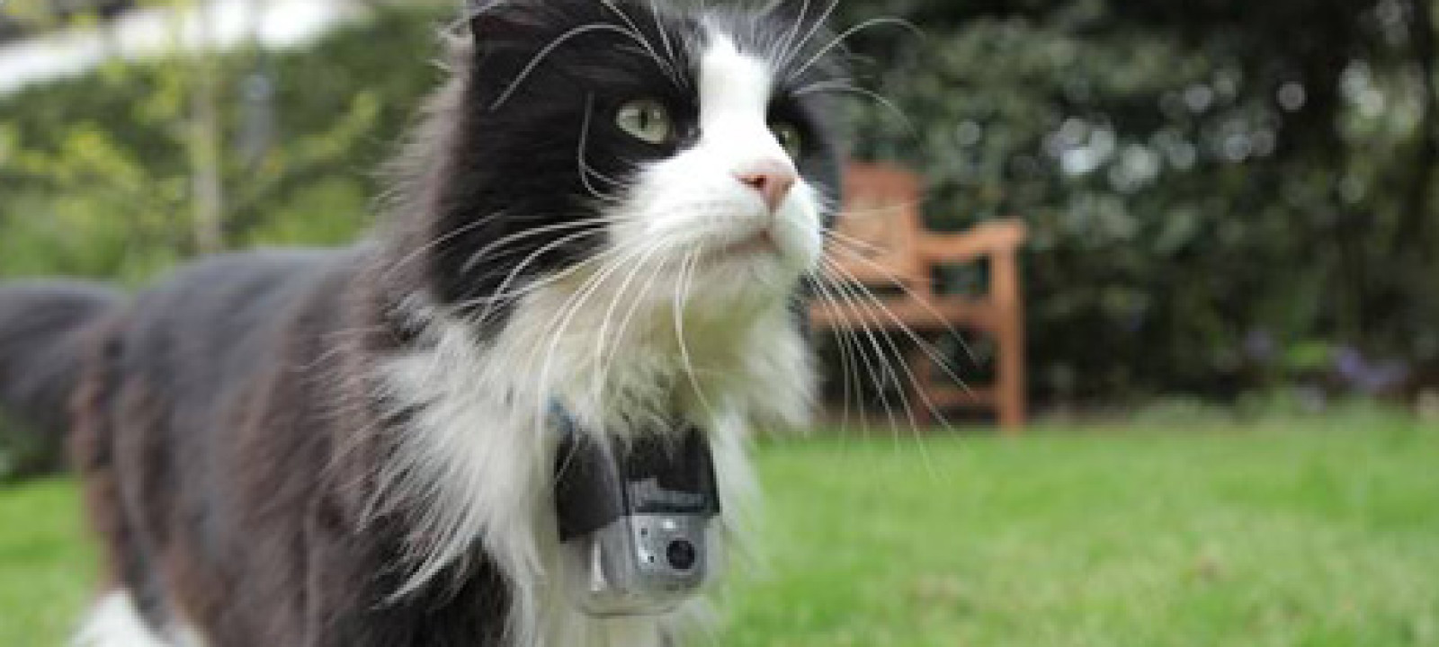 Thomas-catcam