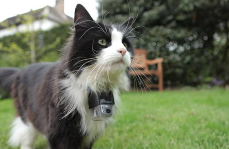 "Thomas wears a ""catcam"" as he roams. (BBC2)"