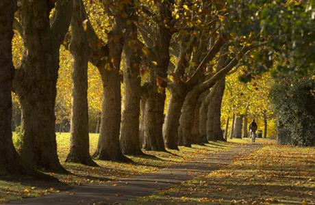 Victoria Park. (AP)