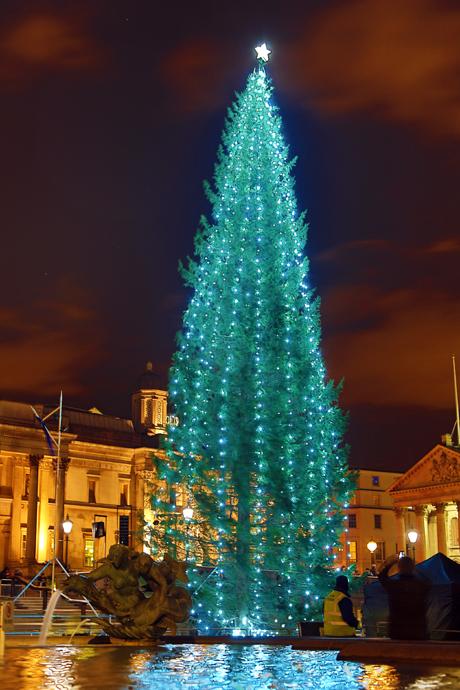England Christmas Tree.Snapshot 21 Photos Of U K Christmas Lights Anglophenia