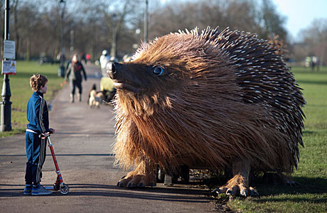 A tense standoff between child and hog (AP Images)