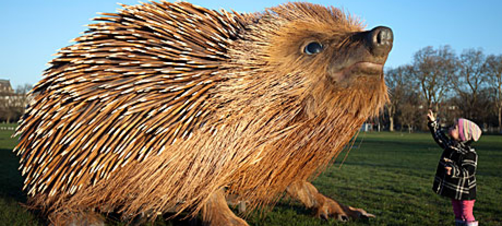 Giant hedgehog