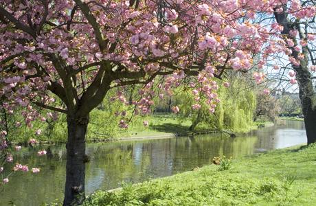 Blossom, Regents Park, London, England, United Kingdom, Europe (Ethel Davies/Robert Harding /AP Images)