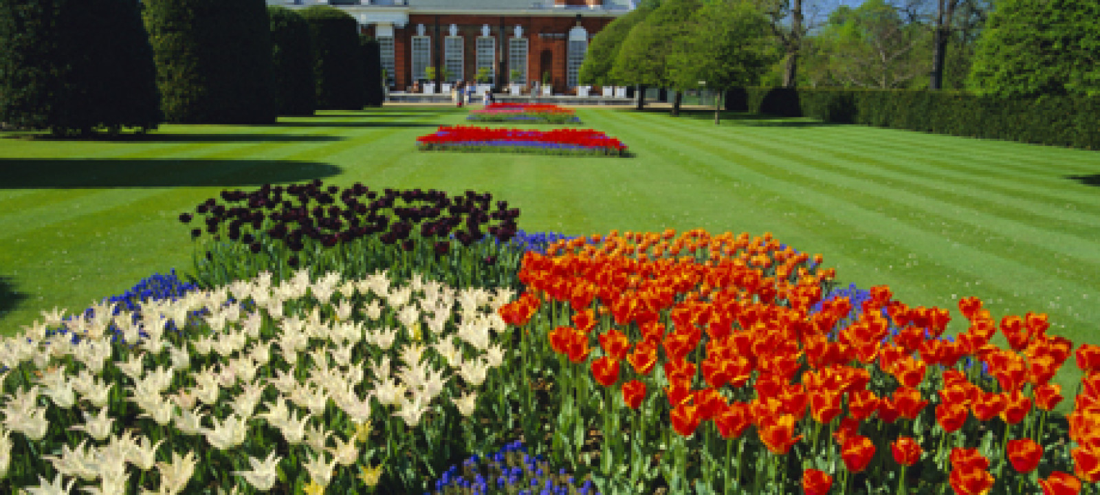 Tulips and the Orangery, Kensington Palace, Kensington Gardens,