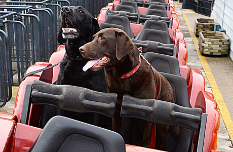 The world's first dog theme park (Pic: Doug Peters/Rex Features)