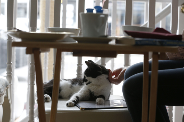 Britain Cat Cafe