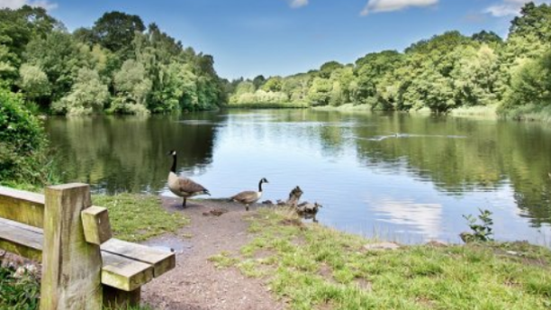 (Forest of Dean)