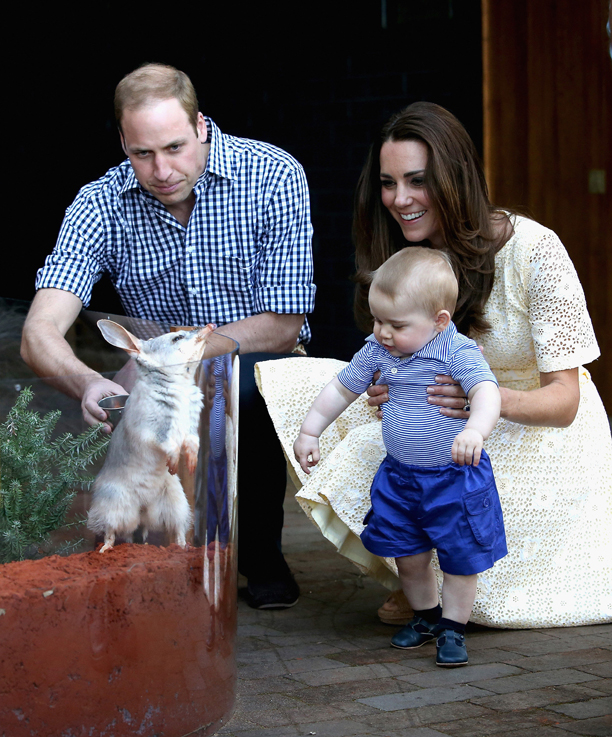 Prince George's first birthday. File photo dated 20/04/14 of The Duke and Duchess of Cambridge and Prince George of Cambridge looking at a Bilby called George at Taronga Zoo in Sydney, Australia. Prince George first birthday is on July 22. Issue date: Sunday July 13, 2014. See PA story ROYAL George Tour. Photo credit should read: Chris Jackson/PA Wire URN:20383137