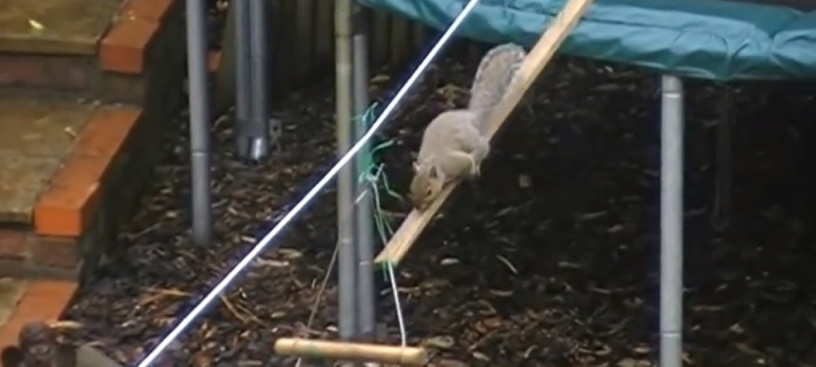 Squirrel Obstacle Course