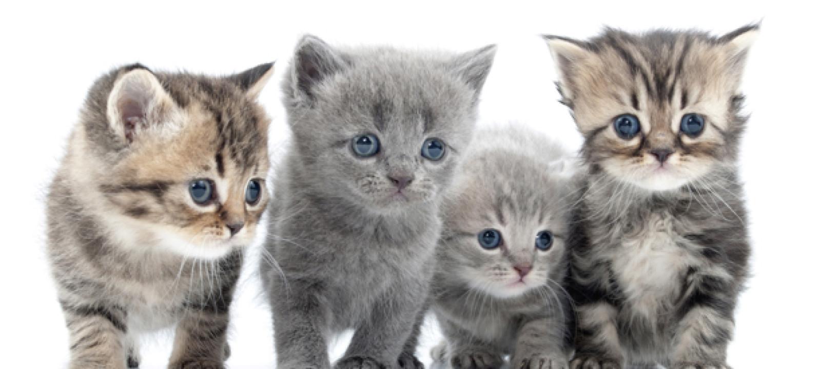 612x344_kittens