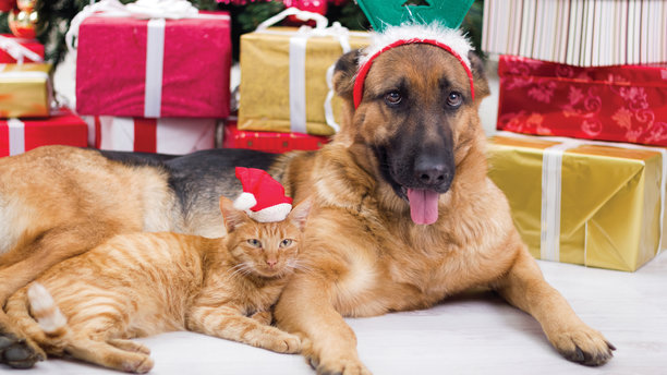 A Christmas-adorned cat and dog awaiting the holidays. (AP Images)