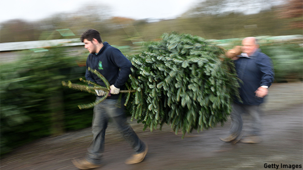 Two men carry away a recently-purchased Christmas tree at Keele Christmas Tree Farm in central England on November 30, 2014. AFP PHOTO / OLI SCARFF        (Photo credit should read OLI SCARFF/AFP/Getty Images)