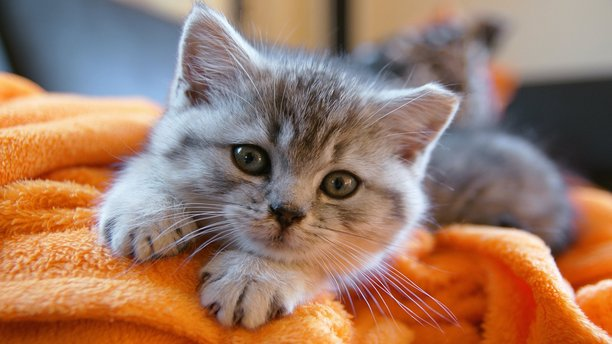 An adorable kitten. (AP Images)