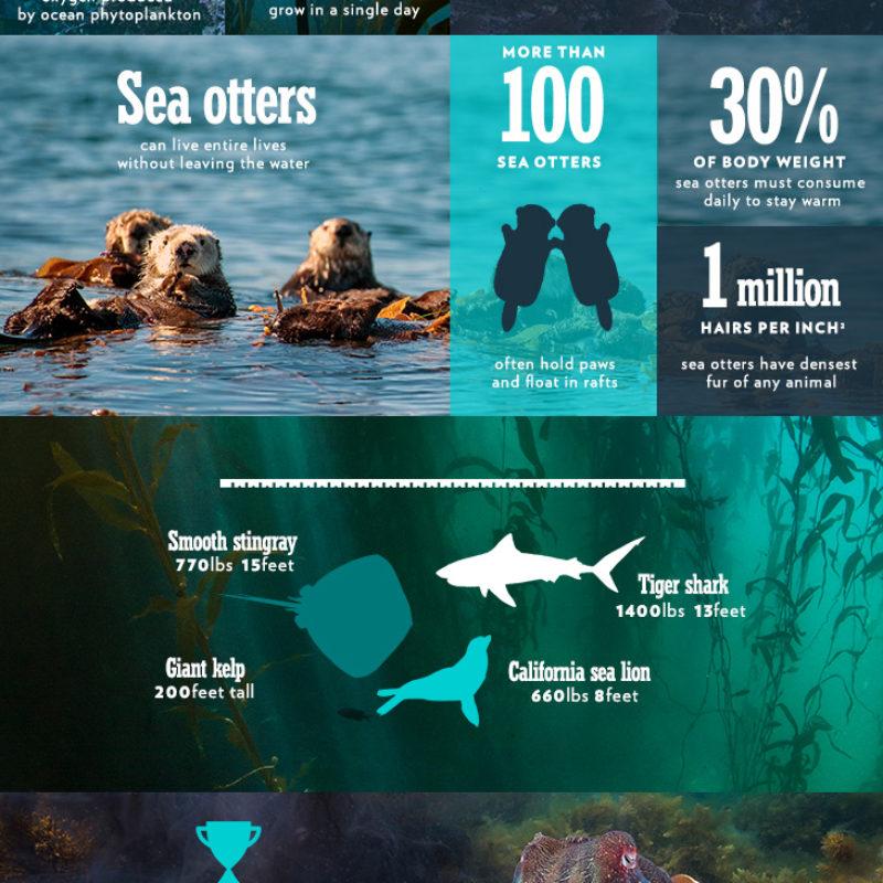 BPII_infographic_ep5_2 (1)