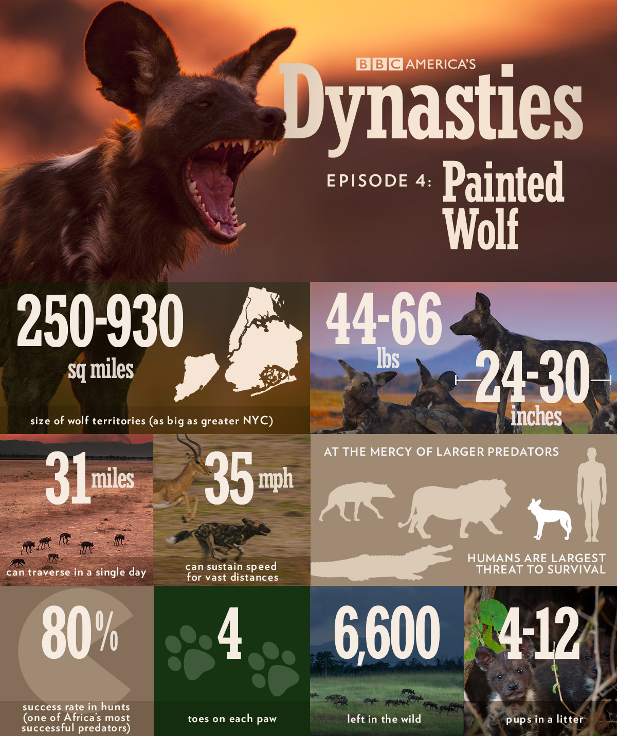 Dynasties-infographic-wolf