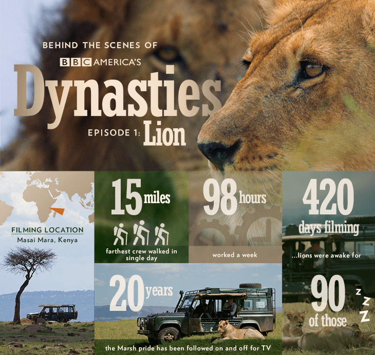 Dynasties_infographic_bts_lion