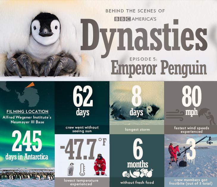 Dynasties_infographic_bts_penguin