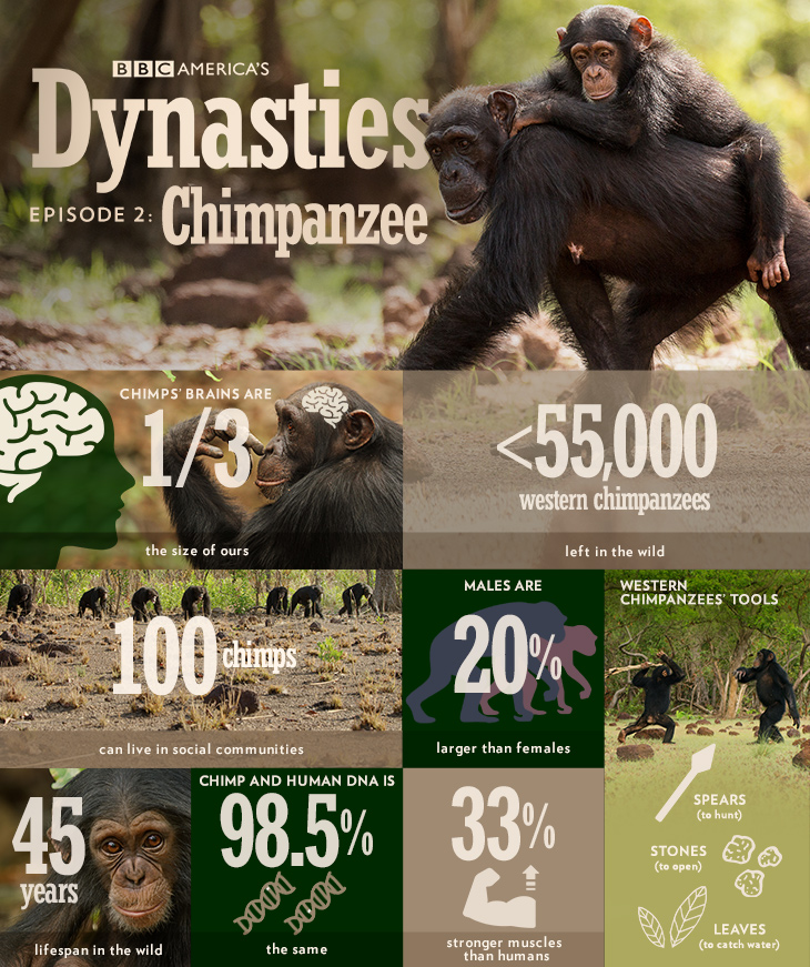 Dynasties_infographic_chimp