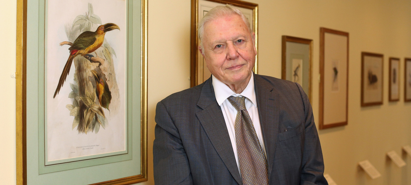 David Attenborough (Photo: Oli Scarff / Getty Images)
