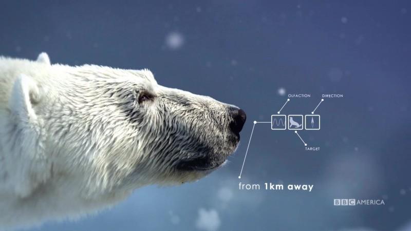 The_Hunt_S1_Social_Animation_1_Polar_Bear_YouTube_Preset_1920x1080_706854467897