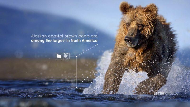 The_Hunt_S1_Social_Animation_4_Brown_Bear_YouTube_Preset_1920x1080_712137795788