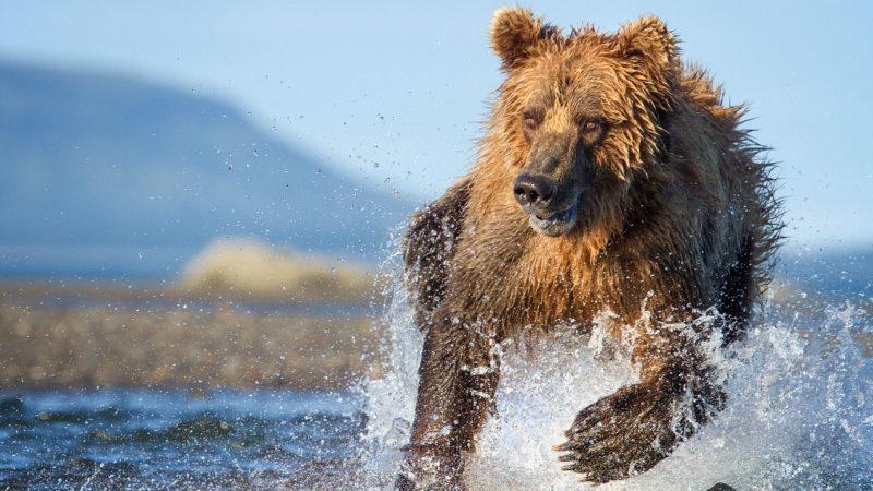 TheHunt_106_bear