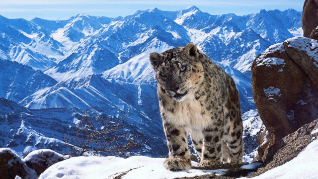 PLANET EARTH II_ Mountains*EMBARGOED UNTIL 29 OCTOBER 2016*