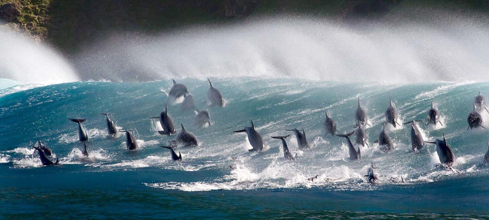 blue-planet-whales-1280