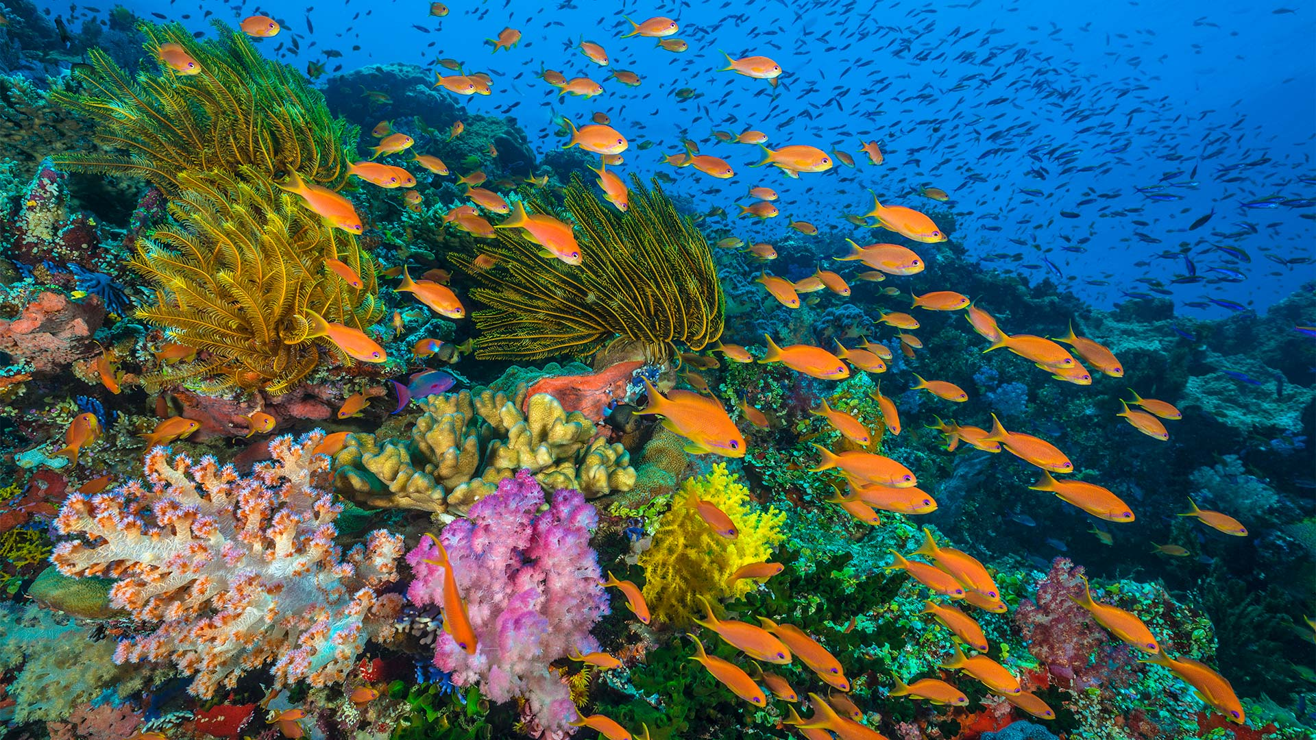 coral reefs planet earth blue planet ii bbc america
