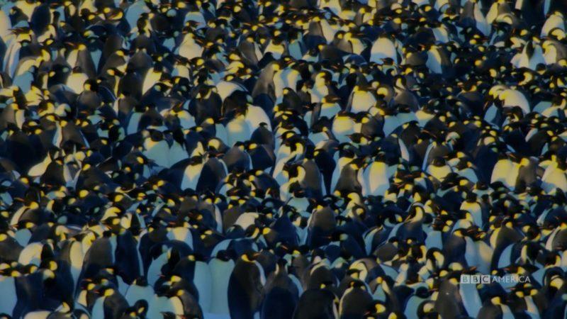 Dynasties_S01_Sneak_Peek_105_Emperor_Penguin_SOCIAL_QUICKEN_LOANS_1920x1080_1438307395729