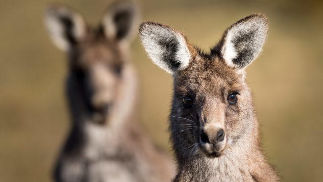 Australia_SWOP_alt