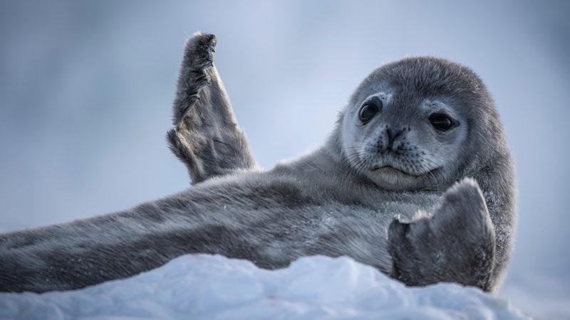 WTV-SWOP-SealWave
