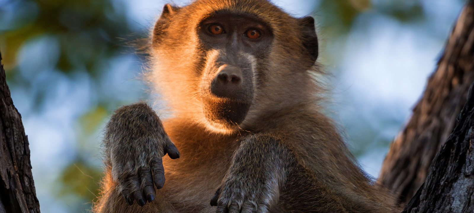 SW_Okavango_1920x1080