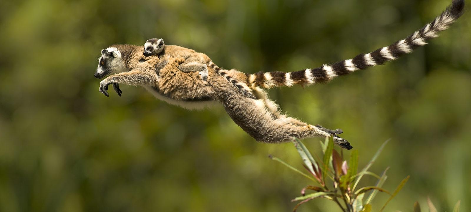 Madagascar_101_1920x1080