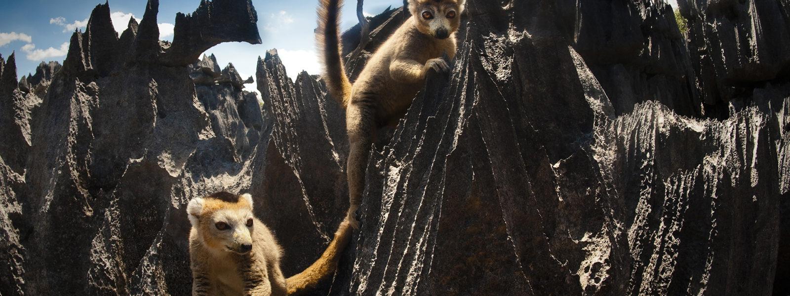 Madagascar_102_1920x1080