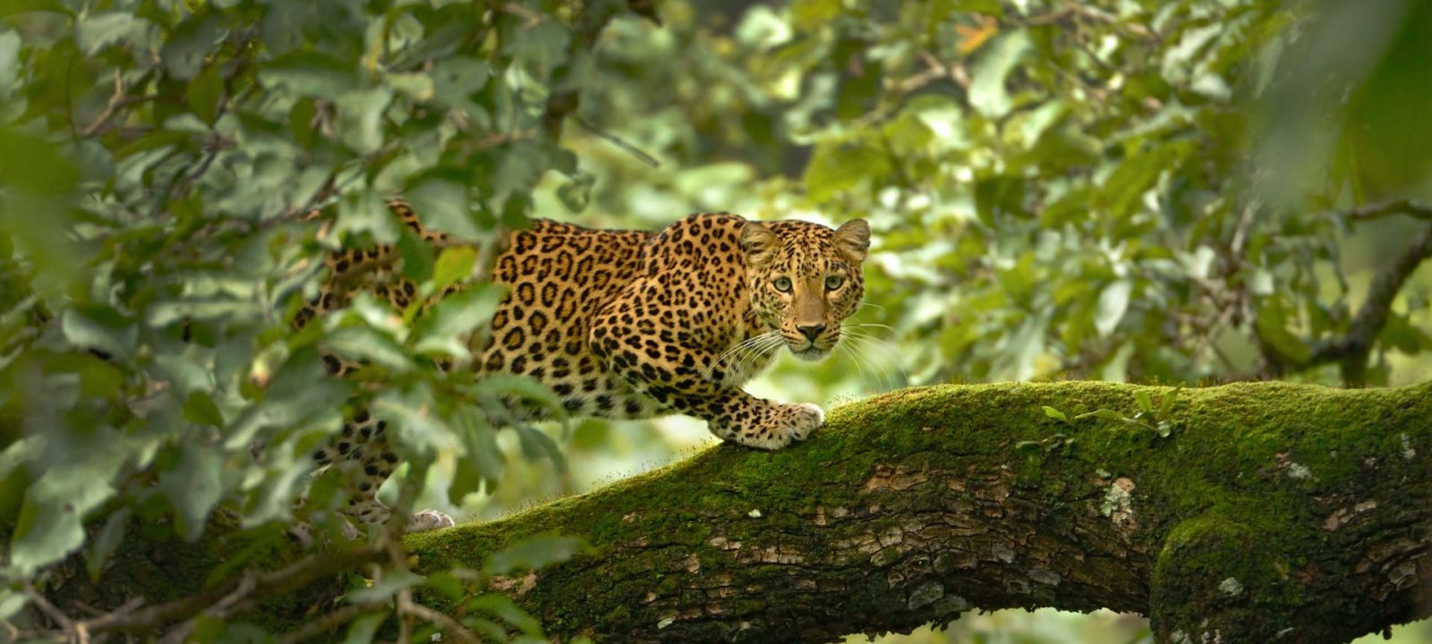 BBCA_WildIndia_1920x1080