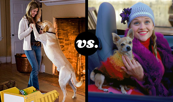 Marley, Bruiser, Sam and Milo Battle It Out for Hollywood's Top Dog