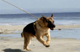 Name That Movie Dog Photo Quiz