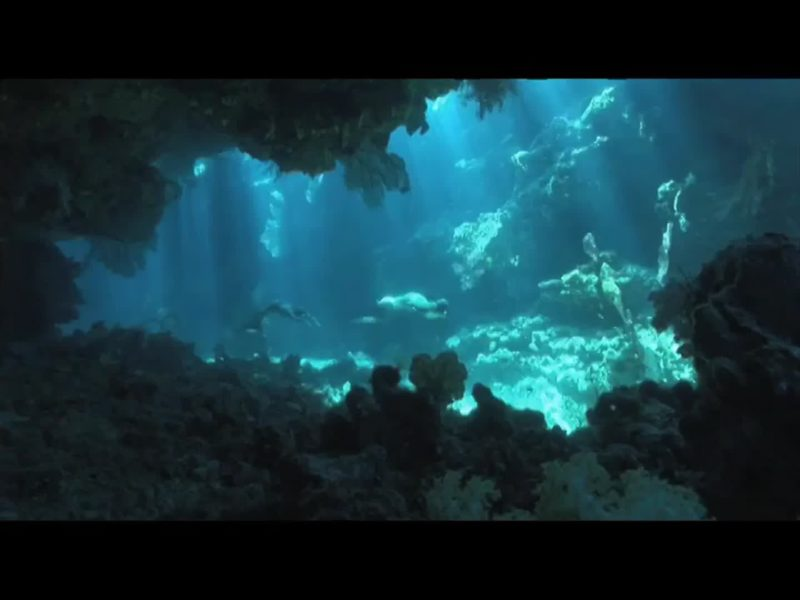 the-cove_1101943363904_mp4_video_1280x720_2432000_primary_audio_eng_6_1920x1080_1101944899741