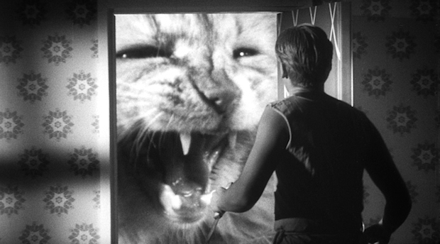 2. Incredible Shrinking Man