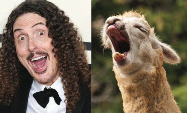 weird-al-llama